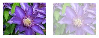 شفاف کردن اشیا و تصاویر در css شفاف کردن اشیا و تصاویر رو در css شفاف کردن اشیا و تصاویر در CSS opacityimg